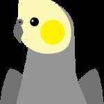 Yellowcheek (Dominant and Sex-linked)